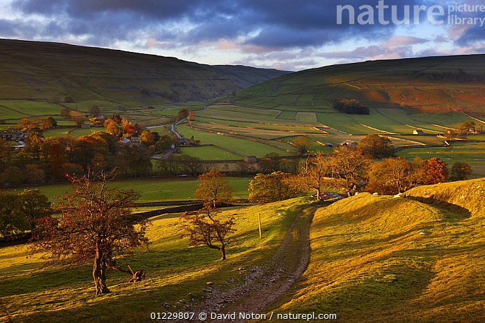 First light on the autumn colours at Arncliffe in Littondale, Yorkshire Dales National Park, England, UK, October 2008, ENGLAND,LANDSCAPES,SUNRISE,UK,AUTUMN,COUNTRYSIDE,DAWN,EUROPE,FARMLAND, United Kingdom, David Noton
