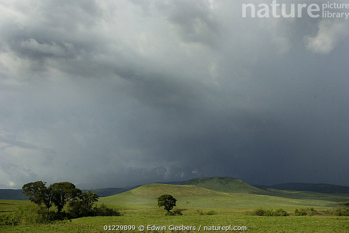 Ngorongoro crater with storm clouds, Tanzania, AFRICA,CLOUDS,EAST AFRICA,GRASSLAND,LANDSCAPES,NP,RAIN,RESERVE,STORMS,TREES,WEATHER,National Park,PLANTS, Edwin Giesbers