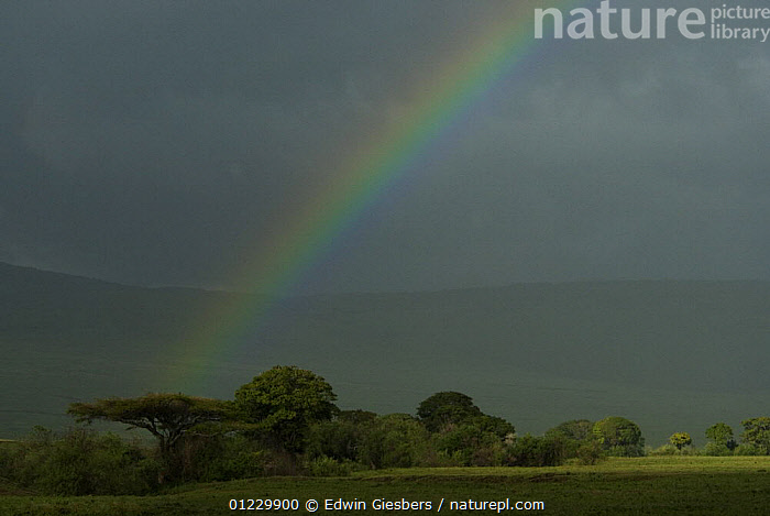 Rainbow in stormy sky,  Ngorongoro crater, Tanzania, AFRICA,ATMOSPHERIC,CLOUDS,EAST AFRICA,LANDSCAPES,NP,RAIN,RAINBOWS,RESERVE,SAVANNA,STORMS,TREES,WEATHER,National Park,Grassland,PLANTS, Edwin Giesbers