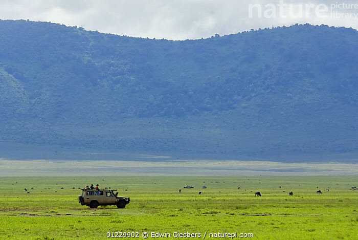 Four wheel drive safari with tourists watching wildlife in the Ngorongoro crater, Tanzania, February 2009, AFRICA,EAST AFRICA,GRASSLAND,LANDSCAPES,NP,PEOPLE,RESERVE,TOURISM,VEHICLES,National Park, Edwin Giesbers