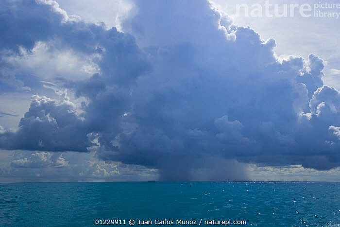 Rain falling from cumulonimbus clouds over the sea, Bahamas, Caribbean, CARIBBEAN,CLOUDS,LANDSCAPES,MARINE,RAIN,RAINING,SEASCAPES,STORMS,TROPICAL,WEATHER,West Indies, Juan Carlos Munoz