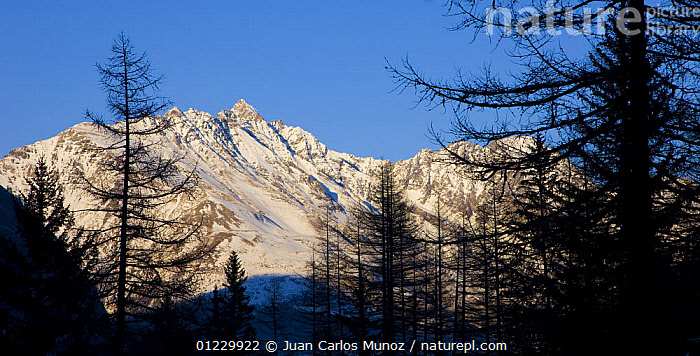 Mountain landscape in Gran Paradiso NP, Valnontey, Aosta valley, Italian alps., ALPS,CONIFEROUS,EUROPE,ITALY,LANDSCAPES,MOUNTAINS,NP,RESERVE,SNOW,TREES,National Park,PLANTS, Juan Carlos Munoz