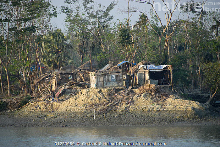 Northern boundary area of Sundarbans Mangrove forest destroyed by cyclone Sidr on November 15 2007, Bangladesh, ASIA,BUILDINGS,DAMAGE,DESTRUCTION,LANDSCAPES,MANGROVES,PEOPLE,RESERVE,STORMS,TREES,WEATHER,WIND,INDIAN-SUBCONTINENT,PLANTS, Gertrud & Helmut Denzau
