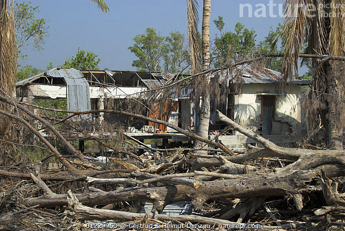 House at Kotka Forest Station destroyed by cyclone Sidr on November 15 2007, Coastal area of Sundarban East Wildlife Sanctuary, Sundarbans Mangrove forest, Bangladesh, ASIA,BUILDINGS,DAMAGE,DESTRUCTION,RESERVE,STORMS,TREES,WEATHER,WIND,WOOD,INDIAN-SUBCONTINENT,PLANTS, Gertrud & Helmut Denzau