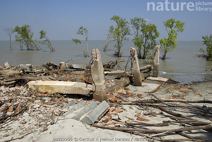 Totally damaged Forest Station destroyed by cyclone Sidr on November 15 2007, on the coast of Mandabaria island, Sundarban West Wildlife Sanctuary, Sundarbans Mangrove forest, Bangladesh, ASIA,BUILDINGS,COASTS,DAMAGE,DESTRUCTION,LANDSCAPES,MANGROVES,RESERVE,STORMS,TREES,WEATHER,WIND,INDIAN-SUBCONTINENT,PLANTS, Gertrud & Helmut Denzau