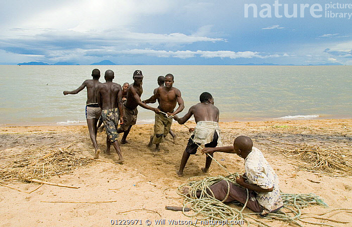 Young men and boys hauling in fishing boat half a kilometre out at Lake Malawi, Chipoka, Malawi. February 2008, BEACHES,BOATS,CHILDREN,COASTS,FISHING,LAKES,MANOEUVRES,PEOPLE,PROCEDURES,pulling,SOUTHERN AFRICA,TROPICAL,WORKING, Will Watson