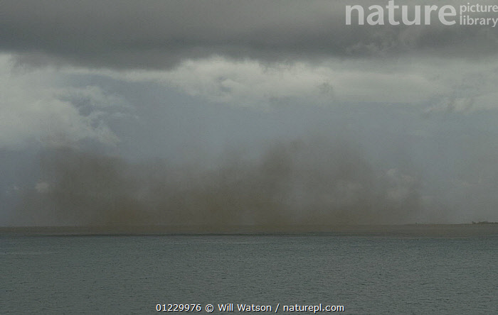 Swarm of lake flies (Chaoborus edulis) on Lake Malawi, Malawi. February 2008, CLOUDS,DIPTERA,HORRIFIC,INSECTS,LAKES,LANDSCAPES,mass,SOUTHERN AFRICA,swarming,swarms,Weather,Invertebrates, Will Watson