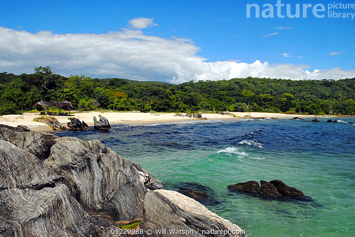 Lake Malawi (Lake Niassa) beach after a storm with a strand of leaf debris gneiss (metamorphic rock) in the foreground and natural Brachystegia woodland in background, Nkwichi Lodge, Niassa Province, Mozambique. February 2008, BEACHES,BLUE,LAKES,LANDSCAPES,SOUTHERN AFRICA, Will Watson