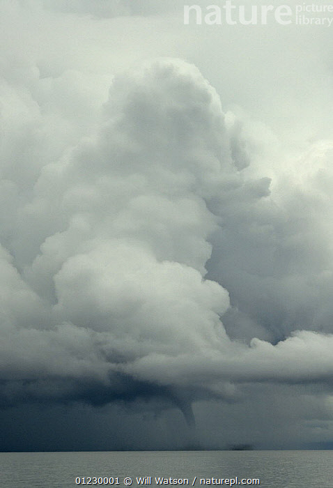 Waterspout and towering cumulus cloud over Lake Malawi, February 2008 Malawi., CLOUDS,DRAMATIC,LAKES,LANDSCAPES,SOUTHERN AFRICA,STORMS,tornado,VERTICAL,WATER,WEATHER,CONCEPTS, Will Watson