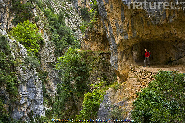 Hiker on the Ruta del Cares path where it is cut into the mountainside, Pico de Europa NP, Leon, Northern Spain  October 2006, CANTABRIAN MOUNTAINS,CAVES,EUROPE,FOOTPATH,FOOTPATHS,HIKING,LANDSCAPES,MOUNTAINS,NP,PATHS,PEOPLE,RESERVE,SPAIN,WALKING,National Park, Juan Carlos Munoz