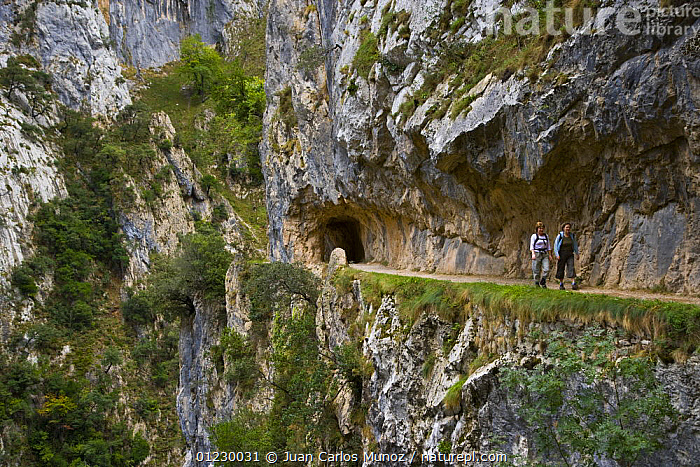 Hikers on the Ruta del Cares path where it is cut into the mountainside, Pico de Europa NP, Leon, Northern Spain  October 2006, CANTABRIAN MOUNTAINS,CAVES,CLIFFS,EUROPE,FOOTPATH,FOOTPATHS,HIKING,LANDSCAPES,MOUNTAINS,NP,PATHS,PEOPLE,RESERVE,SPAIN,WALKING,Geology,National Park, Juan Carlos Munoz
