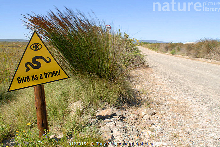 "Snake crossing warning sign ""Give us a brake"" next to road, DeHoop, Western Cape, South Africa, AFRICA,GRASSLAND,REPTILES,ROADS,SIGNS,SNAKES,SOUTHERN AFRICA, Tony Phelps"