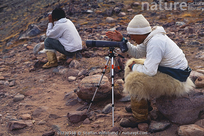 Inuit Narwhal hunter wearing polar bearskin trousers, Storm Uudaq, searching for Narwhal using telescope, Qaanaaq, NW Greenland, 1996., ARCTIC,COASTS,FUR,GREENLAND,HUNTING FOOD,OLD NEW,PEOPLE,POLAR BEAR,SKIN,TRADITIONAL,WHALE,WHALES, Staffan Widstrand