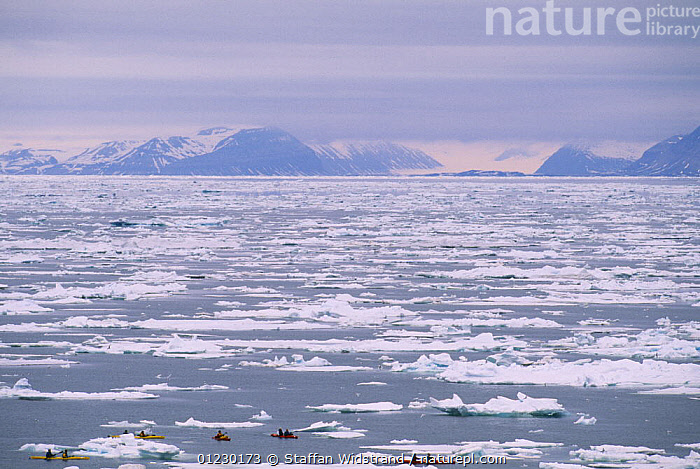 Kayak paddling ecotourists, Isfjorden, Svalbard / Spitzbergen, Norway, ARCTIC,BOATS,CANOES,COASTS,EUROPE,ICE,KAYAKING,KAYAKS,LANDSCAPES,NORWAY,PEOPLE,TOURISM,OPEN-BOATS, BOATS,SPORTS, WATERSPORTS, Scandinavia , spitsbergen, BOATS, WATERSPORTS, Scandinavia, BOATS, WATERSPORTS, Scandinavia, BOATS, WATERSPORTS, Scandinavia, Staffan Widstrand