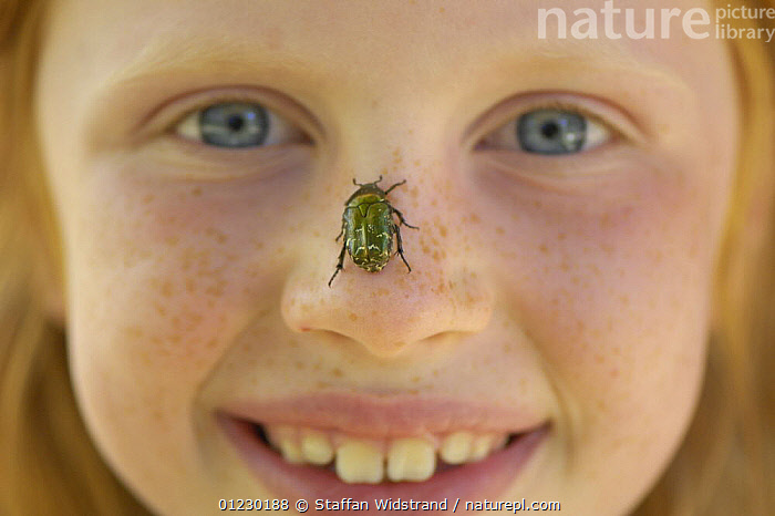 Mimmi Widstrand with a Rose chafer {Cetonia aurata} on her nose. Bugs are fun! Gotska Sand�n National Park, Sweden, July 2007. Model released, BEETLES,CHAFERS,CHILDREN,COLEOPTERA,EUROPE,FACES,GIRL,INSECTS,INVERTEBRATES,NATURE,PEOPLE,PORTRAITS,SCANDINAVIA,SWEDEN, Scandinavia, Staffan Widstrand