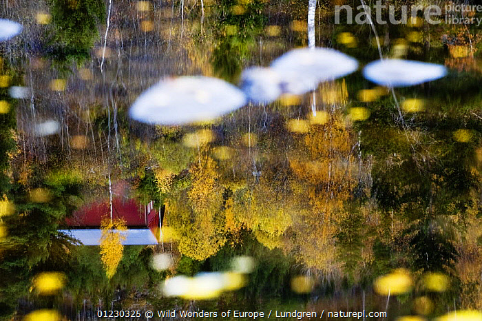 Reflections in a pool of water formed by pebbles on the bank of the River Orkla, Norway, September 2008, ABSTRACT,BUILDINGS,EUROPE,LEAVES,MAGNUS LUNDGREN,REFLECTIONS,RIVERS,SCANDINAVIA,TREES,WATER,WWE, Scandinavia,PLANTS, Scandinavia, Wild Wonders of Europe / Lundgren