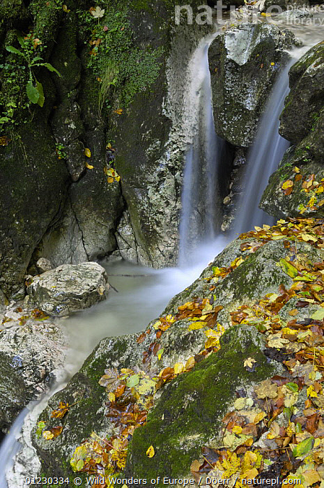 Waterfall, Valea Prapastiilor, Piatra Craiului National Park, Transylvania, Southern Carpathian Mountains, Romania, October 2008, CORNELIA DOERR,EASTERN EUROPE,EUROPE,LANDSCAPES,LEAVES,MOSS,NP,RESERVE,ROCKS,STREAMS,VERTICAL,WATER,WATERFALLS,WWE,National Park, Wild Wonders of Europe / Döerr