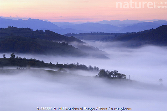 Rural landscape at dawn near Zarnesti, Transylvania, Southern Carpathian Mountains, Romania, October 2008, CORNELIA DOERR,DAWN,EASTERN EUROPE,EUROPE,LANDSCAPES,MIST,MOUNTAINS,TREES,WWE,PLANTS, Wild Wonders of Europe / Döerr
