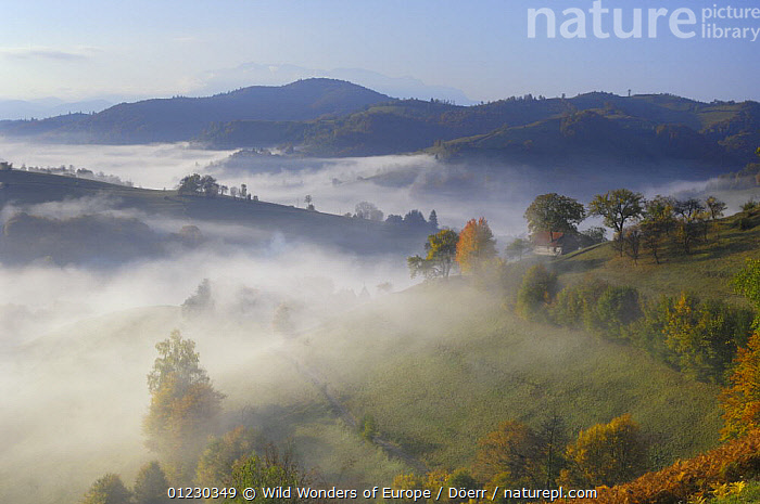 Rural landscape with morning mist near Zarnesti, Transylvania, Southern Carpathian Mountains, Romania, October 2008, CORNELIA DOERR,COUNTRYSIDE,EASTERN EUROPE,EUROPE,HILLS,LANDSCAPES,MIST,MOUNTAINS,TREES,WWE,PLANTS, Wild Wonders of Europe / Döerr