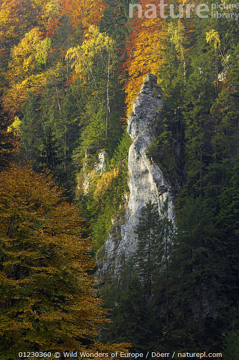 Woodland landscape in the Dambovita Valley, Piatra Craiului, Transylvania, Southern Carpathian Mountains, Romania, October 2008, AUTUMN,CORNELIA DOERR,EASTERN EUROPE,EUROPE,FORESTS,LANDSCAPES,NP,ROCK FORMATIONS,ROCKS,TREES,VERTICAL,WOODLANDS,WWE,National Park,Geology,PLANTS, Wild Wonders of Europe / Döerr