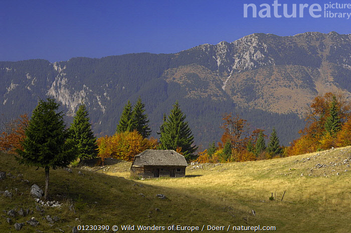 Alpine meadow with the Piatra Craiului Mountains behind, Piatra Craiului National Park, Transylvania, Southern Carpathian Mountains, Romania, October 2008, BUILDINGS,CORNELIA DOERR,EASTERN EUROPE,EUROPE,FORESTS,LANDSCAPES,MEADOWLAND,MOUNTAINS,NP,RESERVE,TREES,WWE,Grassland,National Park,PLANTS, Wild Wonders of Europe / Döerr