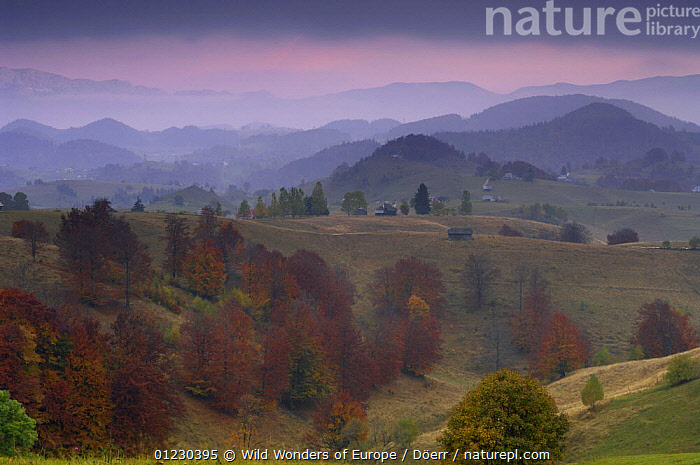 Rural landscape near Sirnea, Transylvania, Southern Carpathian Mountains, Romania, October 2008, ATMOSPHERIC,BUILDINGS,CORNELIA DOERR,COUNTRYSIDE,DAWN,DUSK,EASTERN EUROPE,EUROPE,FARMLAND,FORESTS,LANDSCAPES,TREES,WWE,PLANTS, Wild Wonders of Europe / Döerr