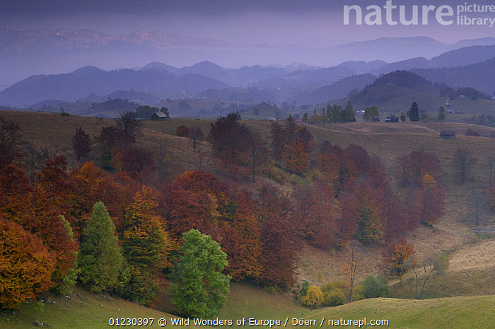 Rural landscape near Sirnea, Transylvania, Southern Carpathian Mountains, Romania, October 2008, AUTUMN,BUILDINGS,CORNELIA DOERR,COUNTRYSIDE,EASTERN EUROPE,EUROPE,FARMLAND,LANDSCAPES,TREES,WWE,PLANTS, Wild Wonders of Europe / Döerr