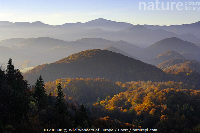 Forest covered hills, Piatra Craiului National Park, Transylvania, Southern Carpathian Mountains, Romania, October 2008, AUTUMN,CORNELIA DOERR,COUNTRYSIDE,EASTERN EUROPE,EUROPE,FORESTS,LANDSCAPES,MOUNTAINS,NP,RESERVE,TREES,WWE,National Park,PLANTS, Wild Wonders of Europe / Döerr