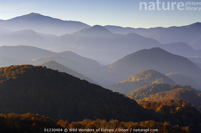 Forest covered hills, Piatra Craiului National Park, Transylvania, Southern Carpathian Mountains, Romania, October 2008, CORNELIA DOERR,EASTERN EUROPE,EUROPE,FORESTS,LANDSCAPES,MIST,MOUNTAINS,NP,RESERVE,TREES,WWE,National Park,PLANTS, Wild Wonders of Europe / Döerr