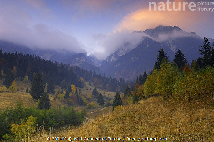 Rock of the King, Piatra Craiului National Park, Transylvania, Southern Carpathian Mountains, Romania, October 2008, CLOUDS,CORNELIA DOERR,COUNTRYSIDE,EASTERN EUROPE,EUROPE,LANDSCAPES,MOUNTAINS,NP,TREES,WWE,Weather,National Park,PLANTS, Wild Wonders of Europe / Döerr