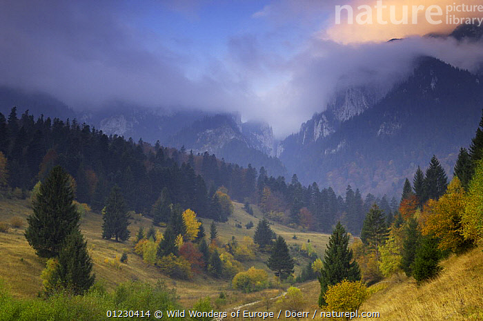 Rock of the King, Piatra Craiului National Park, Transylvania, Southern Carpathian Mountains, Romania, October 2008, CLOUDS,CORNELIA DOERR,COUNTRYSIDE,EASTERN EUROPE,EUROPE,LANDSCAPES,MOUNTAINS,NP,RESERVE,TREES,WWE,Weather,National Park,PLANTS, Wild Wonders of Europe / Döerr
