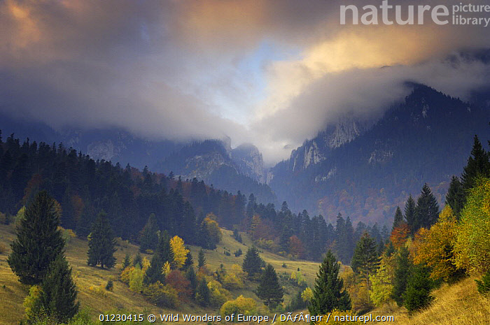 Rock of the King, Piatra Craiului National Park, Transylvania, Southern Carpathian Mountains, Romania, October 2008., ATMOSPHERIC,CLOUDS,CORNELIA DOERR,COUNTRYSIDE,EASTERN EUROPE,EUROPE,FORESTS,LANDSCAPES,MOUNTAINS,NP,RESERVE,TREES,WWE,Weather,National Park,PLANTS, Wild Wonders of Europe / Döerr