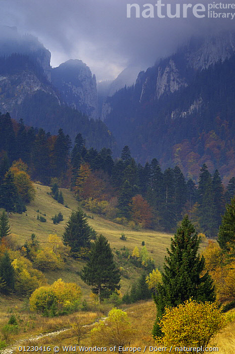 Rock of the King, Piatra Craiului National Park, Transylvania, Southern Carpathian Mountains, Romania, October 2008, CORNELIA DOERR,COUNTRYSIDE,EASTERN EUROPE,EUROPE,LANDSCAPES,MOUNTAINS,NP,RESERVE,ROCK FORMATIONS,TREES,VERTICAL,WWE,National Park,Geology,PLANTS, Wild Wonders of Europe / Döerr