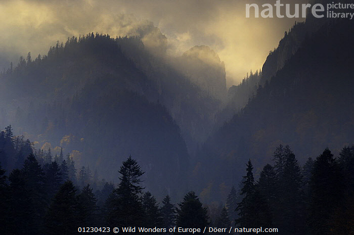 Valea Crapaturii and Rock of the King, Piatra Craiului National Park, Transylvania, Southern Carpathian Mountains, Romania, October 2008, ATMOSPHERIC,CLOUDS,CORNELIA DOERR,EASTERN EUROPE,EUROPE,LANDSCAPES,MOUNTAINS,NP,RESERVE,SILHOUETTES,TREES,WWE,Weather,National Park,PLANTS, Wild Wonders of Europe / Döerr