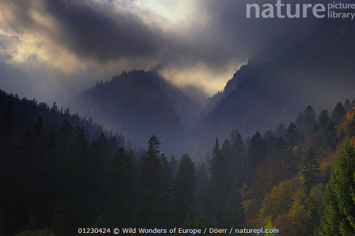 Valea Crapaturii and Rock of the King, Piatra Craiului National Park, Transylvania, Southern Carpathian Mountains, Romania, October 2008, CLOUDS,CORNELIA DOERR,EASTERN EUROPE,EUROPE,LANDSCAPES,NP,RESERVE,SILHOUETTES,TREES,WWE,Weather,National Park,PLANTS, Wild Wonders of Europe / Döerr