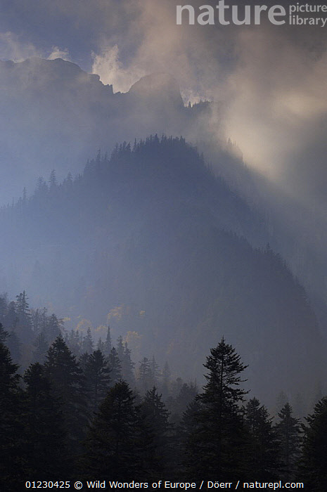 Valea Crapaturii and Rock of the King, NP Piatra Craiului, Transylvania, Southern Carpathian Mountains, Romania, October 2008, CLOUDS,CORNELIA DOERR,EASTERN EUROPE,EUROPE,LANDSCAPES,MOUNTAINS,NP,RESERVE,SILHOUETTES,TREES,VERTICAL,WWE,Weather,National Park,PLANTS, Wild Wonders of Europe / Döerr
