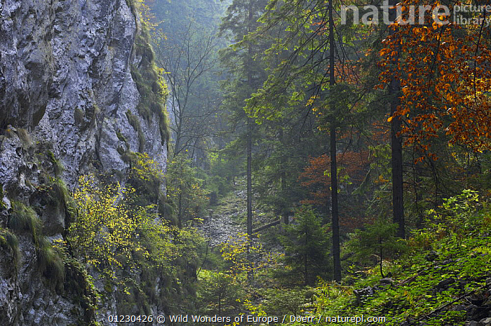Valea Crapaturii and Rock of the King, Piatra Craiului National Park, Transylvania, Southern Carpathian Mountains, Romania, October 2008, CORNELIA DOERR,EASTERN EUROPE,EUROPE,LANDSCAPES,NP,RESERVE,ROCKS,TREES,WWE,National Park,PLANTS, Wild Wonders of Europe / Döerr