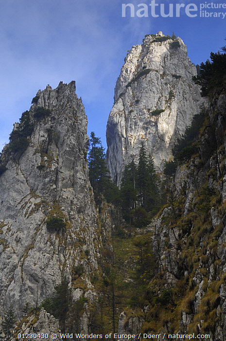 Valea Crapaturii, Piatra Craiului National Park, Transylvania, Southern Carpathian Mountains, Romania, October 2008, CORNELIA DOERR,EASTERN EUROPE,EUROPE,LANDSCAPES,LIMESTONE,MOUNTAINS,NP,RESERVE,ROCK FORMATIONS,TREES,VERTICAL,WWE,National Park,Geology,PLANTS, Wild Wonders of Europe / Döerr