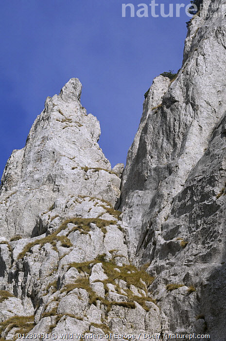 Limestone rocks in Valea Crapaturii, Piatra Craiului National Park, Transylvania, Southern Carpathian Mountains, Romania, October 2008, CORNELIA DOERR,EASTERN EUROPE,EUROPE,GEOLOGY,LANDSCAPES,MOUNTAINS,NP,RESERVE,ROCK FORMATIONS,VERTICAL,WWE,National Park, Wild Wonders of Europe / Döerr
