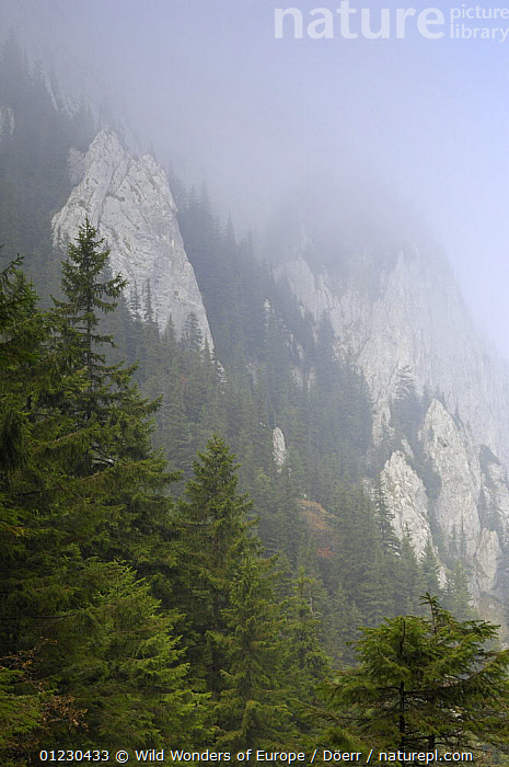 Limestone rocks shrouded in mist in Valea Crapaturii, Piatra Craiului National Park, Transylvania, Southern Carpathian Mountains, Romania, October 2008, CORNELIA DOERR,EASTERN EUROPE,EUROPE,LANDSCAPES,MIST,MOUNTAINS,NP,RESERVE,ROCKS,TREES,VERTICAL,WWE,National Park,PLANTS, Wild Wonders of Europe / Döerr