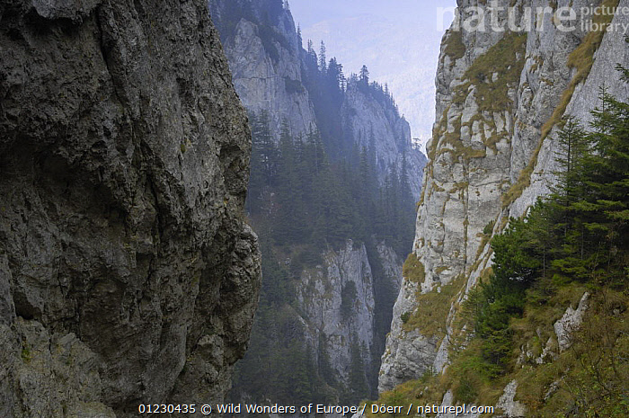 Limestone rocks in Valea Crapaturii, Piatra Craiului National Park, Transylvania, Southern Carpathian Mountains, Romania, October 2008, CORNELIA DOERR,EASTERN EUROPE,EUROPE,LANDSCAPES,MOUNTAINS,NP,RESERVE,ROCK FORMATIONS,ROCKS,TREES,WWE,National Park,Geology,PLANTS, Wild Wonders of Europe / Döerr
