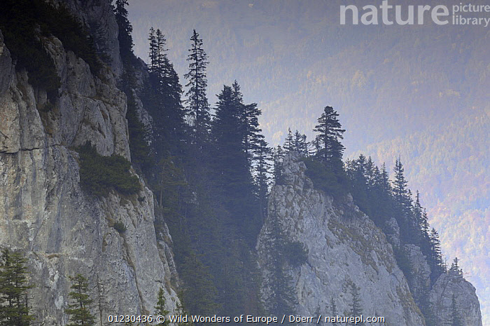 Limestone rocks in Valea Crapaturii, Piatra Craiului National Park, Transylvania, Southern Carpathian Mountains, Romania, October 2008, CORNELIA DOERR,EASTERN EUROPE,EUROPE,GEOLOGY,LANDSCAPES,MOUNTAINS,NP,RESERVE,ROCK FORMATIONS,TREES,WWE,National Park,PLANTS, Wild Wonders of Europe / Döerr