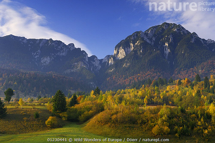 Rock of the King, Mt. Piatra Mica (1816m) and Tumu (1923m), Piatra Craiului National Park, Transylvania, Southern Carpathian Mountains, Romania, October 2008, AUTUMN,CORNELIA DOERR,COUNTRYSIDE,EASTERN EUROPE,EUROPE,FORESTS,LANDSCAPES,MOUNTAINS,NP,RESERVE,ROCK FORMATIONS,TREES,WWE,National Park,Geology,PLANTS, Wild Wonders of Europe / Döerr