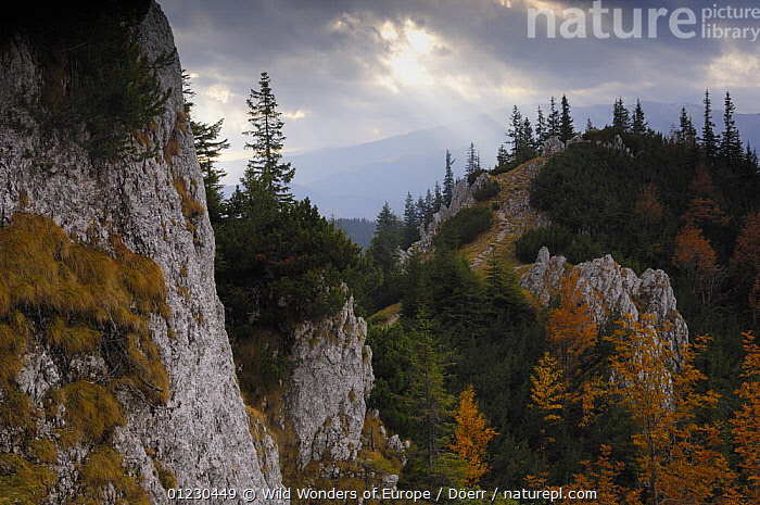 "Rocky limestone area ""La Zaplaz"", Piatra Craiului National Park, Transylvania, Southern Carpathian Mountains, Romania, October 2008, CORNELIA DOERR,EASTERN EUROPE,EUROPE,LANDSCAPES,MOUNTAINS,NP,RESERVE,ROCKS,TREES,WWE,National Park,PLANTS, Wild Wonders of Europe / Döerr"