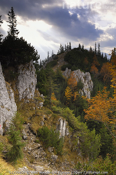 "Rocky limestone area ""La Zaplaz"", Piatra Craiului National Park, Transylvania, Southern Carpathian Mountains, Romania, October 2008, CORNELIA DOERR,EASTERN EUROPE,EUROPE,LANDSCAPES,NP,RESERVE,ROCK FORMATIONS,ROCKS,TREES,VERTICAL,WWE,National Park,Geology,PLANTS, Wild Wonders of Europe / Döerr"