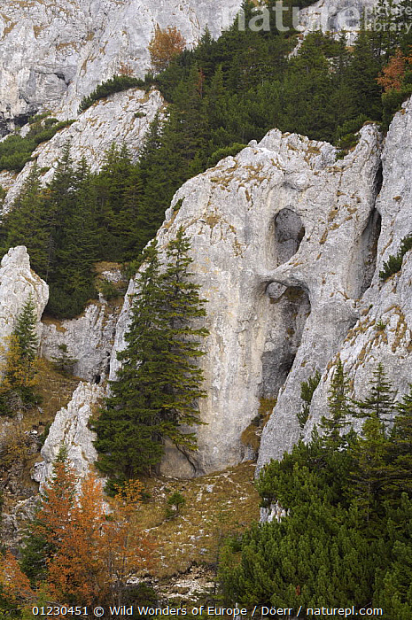 "Rocky limestone area ""La Zaplaz"", Piatra Craiului National Park, Transylvania, Southern Carpathian Mountains, Romania, October 2008, CORNELIA DOERR,EASTERN EUROPE,EROSION,EUROPE,GEOLOGY,LANDSCAPES,NP,RESERVE,ROCK FORMATIONS,ROCKS,TREES,VERTICAL,WWE,National Park,PLANTS, Wild Wonders of Europe / Döerr"