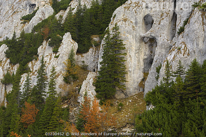 Holes carved by nature in limestone rock, Piatra Craiului National Park, Transylvania, Southern Carpathian Mountains, Romania, October 2008, CORNELIA DOERR,EASTERN EUROPE,EROSION,EUROPE,LANDSCAPES,NP,RESERVE,ROCK FORMATIONS,ROCKS,TREES,WWE,National Park,Geology,PLANTS, Wild Wonders of Europe / Döerr