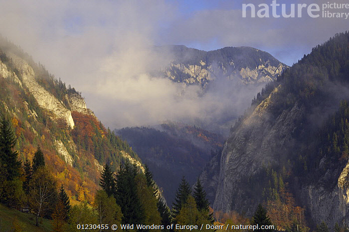 Valea Prapastiilor and Mt. Rock of the King, Piatra Craiului National Park, Transylvania, Southern Carpathian Mountains, Romania, October 2008, CORNELIA DOERR,EASTERN EUROPE,EUROPE,FORESTS,LANDSCAPES,MOUNTAINS,NP,RESERVE,ROCKS,TREES,WWE,National Park,PLANTS, Wild Wonders of Europe / Döerr