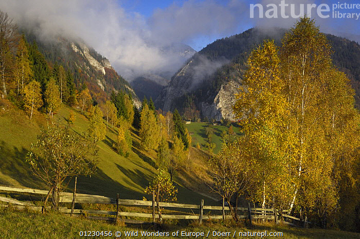 Rural landscape and Mt. Rock of the King, Piatra Craiului National Park, Transylvania, Southern Carpathian Mountains, Romania, October 2008, AUTUMN,CLOUDS,CORNELIA DOERR,COUNTRYSIDE,EASTERN EUROPE,EUROPE,LANDSCAPES,MOUNTAINS,NP,ROCKS,TREES,WWE,Weather,National Park,PLANTS, Wild Wonders of Europe / Döerr