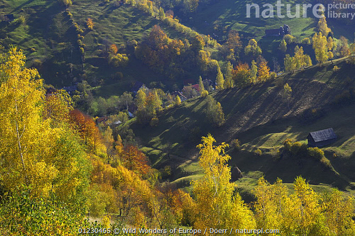 Magurai, Piatra Craiului National Park, Transylvania, Southern Carpathian Mountains, Romania, October 2008, BUILDINGS,CORNELIA DOERR,COUNTRYSIDE,EASTERN EUROPE,EUROPE,LANDSCAPES,NP,RESERVE,TREES,WWE,National Park,PLANTS, Wild Wonders of Europe / Döerr